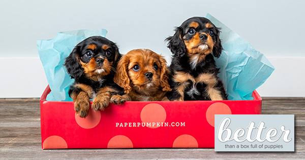 join-the-club-paper-pumpkin-better-than-a-box-of-puppies